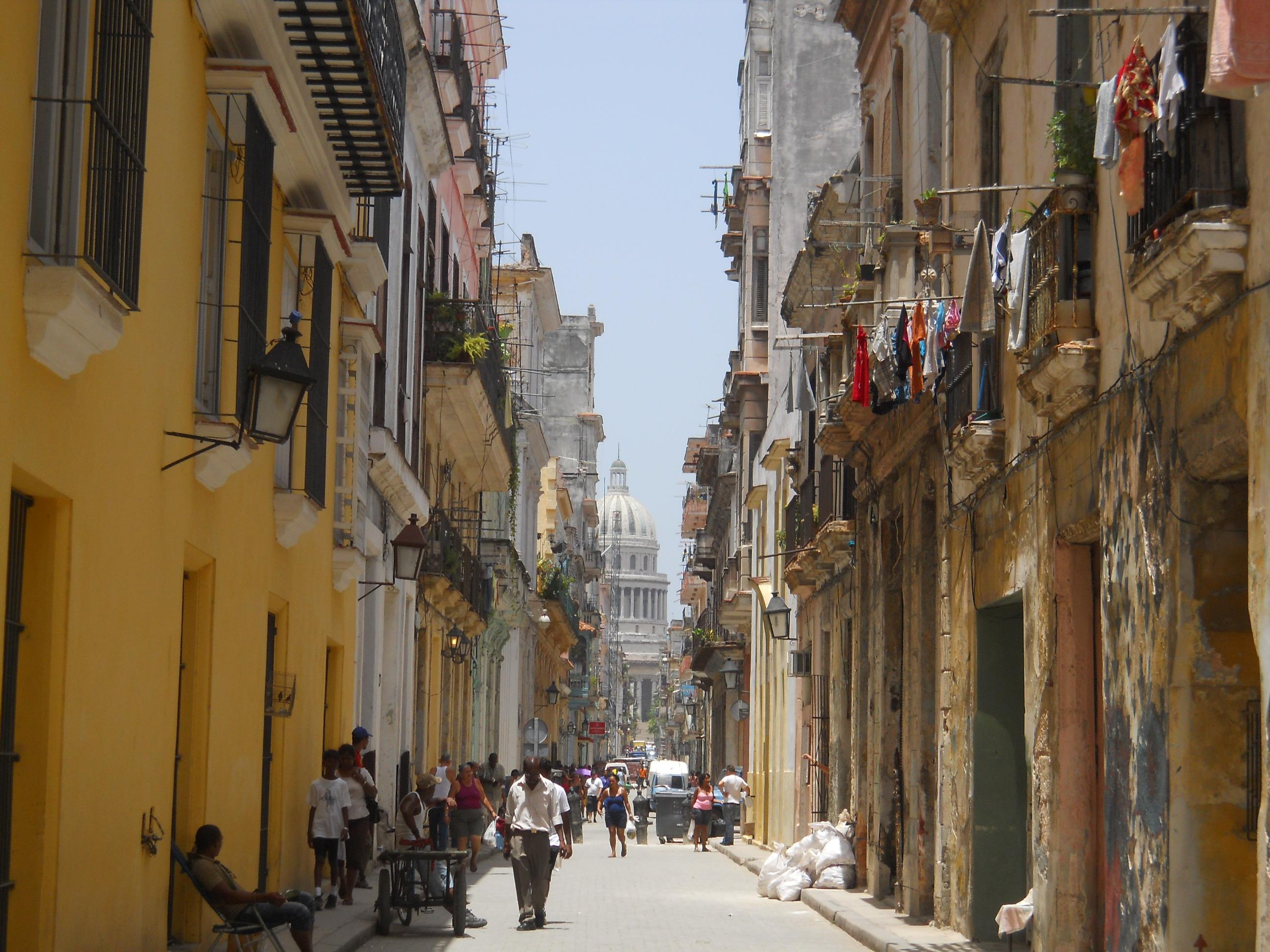 Cuba Quivertree